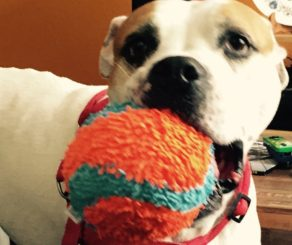 Dog with ball