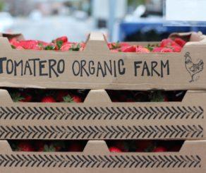 Tomatero Organic Farm Tomatoes