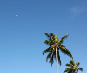 Photo of the sky and palm trees promoting SPF products