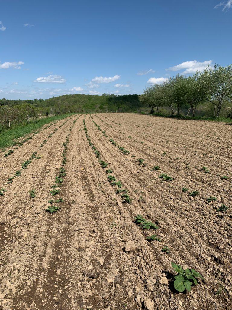 Long Hungry Creek Farm Field